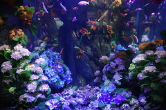 Hydrangea Aquarium (PBY) Tags: enoshima japan kanagawaken katasekaigan topflickr geo:lat=3530995600 geo:lon=13947958400 geotagged imgp0527jpg jpn