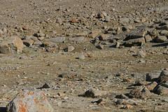 IMG_0648 (y.awanohara) Tags: kailash kora kailashkora ngari tibet may2017 yawanohara