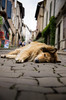 IMGP0794 (fLobOOk) Tags: cordes sur ciel cordessurciel aveyron tarn village médiéval histoire chien chat france europe garonne tarnetgaronne