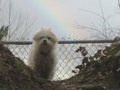 Spirit Dog 💓 (sugarbear1956) Tags: dog rainbow magicunicornverybest coth coth5 untouchabledream