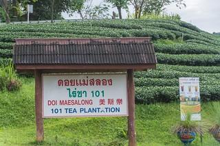 mae salong - thailande 33