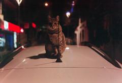 Leica af-c1 2013 05