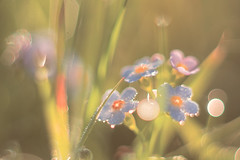 Flowers in the morning (Aleoko) Tags: fotocompetition fotocompetitionbronze