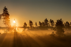 Fire mist (imagesbystefan.com) Tags: fog forest golden warm color nature outdoors natural morning sunrise dawn scenic scenery view beautiful landscape trees woods beam sun fire mist early wilderness sweden summer nordic scandinavia season