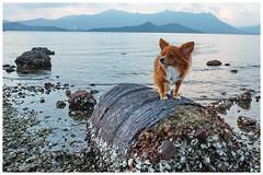 Who will love me (Alice 2018) Tags: 2017 clouds sky evening dusk autumn seashore sea water hongkong ilce6000 sony a6000 sonya6000 sonysel1670zcarlzeissvariotessart tessar zeiss carlzeiss beach pet dog animal autofocus aatvl01 aatvl02 aatvl03 aatvl04