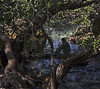 Tityre, tu patulae... (nicolamarongiu) Tags: silhouette bosco sugologone color fiume penombra sardegna sardinia cedrino