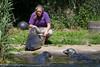 Rhenen - Ouwehands Zoo 2017-8533 (Quistnix!) Tags: 2017 ouwehandszoo dierenpark zoo