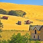 Wheat Harvest near Abandoned House 3440 B thumbnail