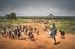 Karimojong shepherd boy (liesbet_sanders) Tags: daytime outdoors outside country landscape horizon shepherd goats tribe traditional africa eastafrica uganda life