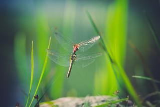 On light wings