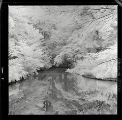 Okunoike pond (seeaurora) Tags: hasselblad planar80mm rollei infrared400 rodinal film ハッセルブラッド フィルム ツァイス プラナー mediumformat selfdevelopment blackandwhite