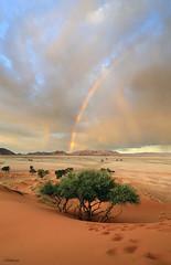 Desert rainbow (clasch) Tags: namibia africa nikkor nikon d7000 landscape nature dune desert sand orange elim view sesriem sossusvlei national park 1224 rainbow mountain tree namib naukluft
