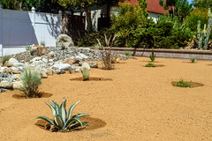 DLS Best Low Water Landscaping Desert Drought Tolerant Resistant Service in Rancho Cucamonga,Upland,Claremont Californina CA (funny.pictures) Tags: landscape landscaping drought tolerant droughttolerant claremont claremontca claremontcalifornia dlslandscape dlslandscaping lowwater claremonthomes claremonthome claremonthouse claremonthouses inlandempire claremontlandscaping claremontlandscape