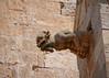 Gargoyle, Ciutadella cathedral (Matt C68) Tags: gargoyle devil demon cathedral sandstone ciutadella menorca minorca spain balearics