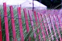 Beach Fence of Yesterday (Haytham M.) Tags: wood sticks wires weeds grass sand bye farewell summer fence beach