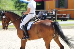 _MG_5765 (dreiwn) Tags: dressage dressurprüfung dressurreiten dressurpferd dressyr ridingarena reitturnier reiten reitverein reitsport ridingclub equestrian horse horseback horseriding horseshow pferdesport pferd pony pferde dressur dressuur tamronsp70200f28divcusd