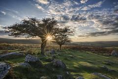 Combestone famous tree (Cliff-Spittle) Tags: sunburst nikond850 nikon20mmprime dartmoornationalpark dartmoor sunset tor