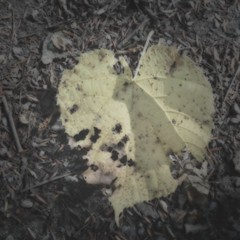 #Autumn #thefall #autumnleaves #trees #fall #seasons #photography #photo #oldschool #oldphoto #oldfashioned #vintage #country #rustic #stills #stilllife #art (muchlove2016) Tags: autumn thefall autumnleaves trees fall seasons photography photo oldschool oldphoto oldfashioned vintage country rustic stills stilllife art