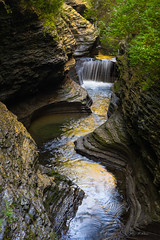 Liquid gold (Ping...) Tags: watkinsglenstatepark upstatenewyork newyorkstateparks gorge