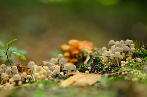 Gombák - Mushrooms