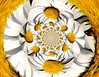 Tourne-fleurs - turning flowers (Emmanuelle Baudry - Em'Art) Tags: art artwork abstract artsurreal abstrait artnumérique digitalart flower fleur focus fractal blanc white jaune yellow emmanuellebaudry emart printemps springtime marguerite