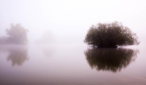 Little Bush in the Fog