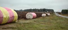 Your Next Pair of Jeans? (TuthFaree) Tags: cotton bales farm agriculture harvest irrigation ga swga georgia color landscape