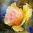 Lillibet.. icon