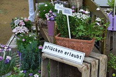 You may pick the flowers :) (petrOlly) Tags: europe europa germany deutschland pottery toepfermarkt moenchengladbach rheydt schlossrheydt schloss handmade object objects flower flowers