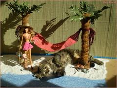Behind the scene with Emma (Mary (Mária)) Tags: cat barbie mattel summer vacation hawaii beach sea summertime palm holiday hammock soraya jamesbond diorama doll marykorcek drno honeyrider toys daria waikiki