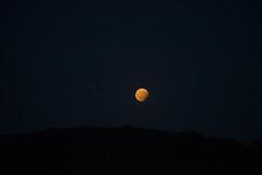 Partial lunar eclipse (Notquiteahuman1) Tags: partiallunareclipse moon oldlens oldschool tripod eclipse stuttgart red blue black dark darkness evening sky silhouette tokina tele manuallens ais nikond610 tokina85210mmf456