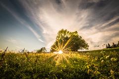 Shining through (Toukensmash) Tags: sunset field austria styira österreich steiermark sunlight landscape sun setting sunstar trees meadow fotowalk sigma1020 sony alpha58 shining through leafs rural agricultur hdr sky tranquil adventure idyllic grass grassland sunrays sundown low angle