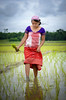 Culture of Assam (dheerajdeka1) Tags: green paddy girl nature assamese culture tradition monsoon woman water clouds assam india worker