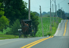 Horse and buggy (afagen) Tags: pennsylvania lancastercounty amishcountry groffdaleconferencemennonitechurch wengermennonite oldordermennonite mennonite horseandbuggy buggy favorite