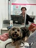 Flo Yorkie Poo Dog at Oakham Post Office McColls Oakham Rutland (@oakhamuk) Tags: flo yorkiepoo dog oakhampostoffice mccolls oakham rutland