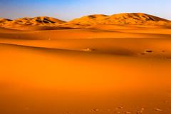 Sahara, Maroc (felixkolbitz) Tags: sahara desert merzouga maroc morocco africa sand camel travel holidays heat sunshine sunset evening blue sky bluesky canoneos6d nature landscape scenery outdoors