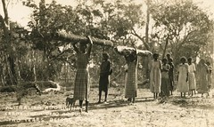 NORTH AUSTRALIAN ABORIGINES CARRY THEIR DEAD ABOUT FOR TWO YEARS BEFORE BURIAL - circa 1920 (Aussie~mobs) Tags: australia aborigine native indigenous tribal vintage barkcoffin dead custom 1920s aussiemobs