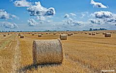 Strohballen auf dem Feld (garzer06) Tags: strohballen deutschland banz wolken himmel blau gelb landschaft naturephoto landschaftsbild naturfoto landschaftsfoto vorpommernrügen stroh wolkenhimmel mecklenburgvorpommern naturphotography landscapephotography naturfotografie vorpommern inselrügen landschaftsfotografie rügen