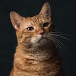 Cat's portrait thumbnail