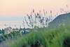 Sunset sea through Lavender. Закатное море (сквозь лаванду) (kva_pharm) Tags: ayudag sunset sea lavender закат море лаванда черное black крым партенит crimea partenit