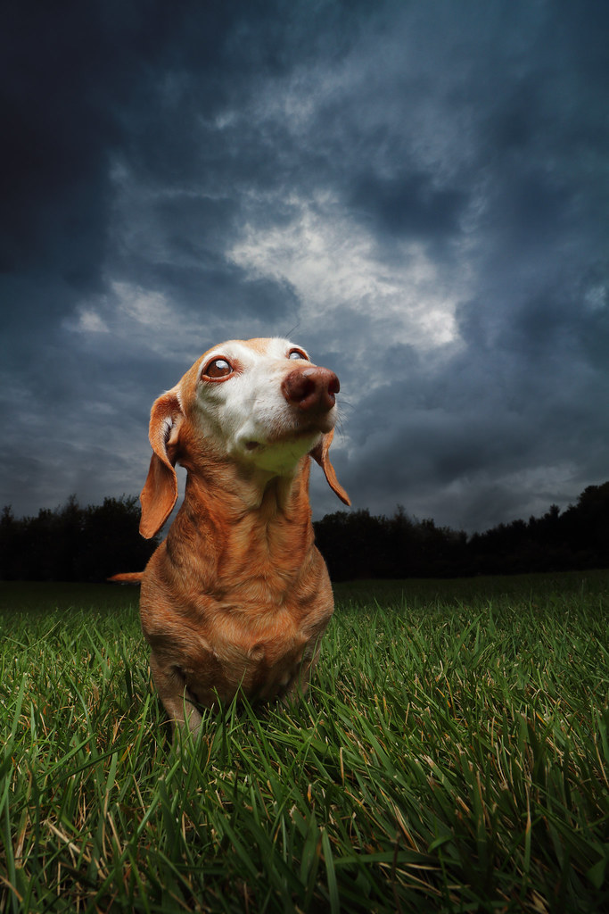 The World's Best Photos of doxie and pet - Flickr Hive Mind