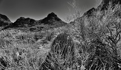 A View Back to Gate Pass (Black & White) (thor_mark ) Tags: nikond800e gatespass tucsonmountainpark day3 lookingene blackwhite silverefexpro2 desert desertlandscape sonorandesert desertplantlife outside nature saguaro cactus carnegieagigantea saguarocactus arborescenttreelikecactus cactusacrossdesertlandscape landscape mountains mountainsindistance mountainsoffindistance capturenx2edited colorefexpro intermountainwest southwestbasinsandranges northsonorandesertranges westtucsonnogalesarea tucsonmountains gatespasspeak brenbenchmark bushmasterpeak project365 wgatespassrd brensbetter arizona unitedstates