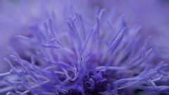 Abysse - MacroMonday (passionpapillon) Tags: macromonday abstractmacro fleur flower bleu blu passionpapillon 2017