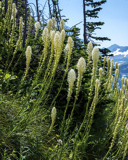 Beargrass 2