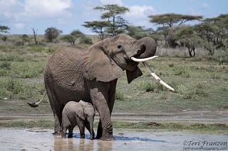 Ivory Orphans and World Elephant Day