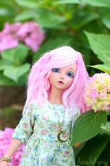 Hydrangea blossoms (Aqua Valkyrie) Tags: dollphotography dollfairyland asianballjointeddoll balljointeddoll kawaiidoll minifee fairylandbjd abjd dollphoto mnf doll bjdaddict dollhobby mnfria dolllover minifeeria abjdphoto bjd bjdphotography bjdhobby bjdalpacawig bjdlover alpacawig