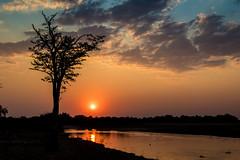 0717 Zambia (25) (ChrisJS2) Tags: southluangwanationalpark southluangwa nationalpark zambia safari safariinsouthluangwa walkingsafari walkingsafarisouthlunagwa