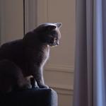 Chat de salon sauvage - Wild house cat thumbnail