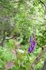DSC_7123 (artsynancy) Tags: portreescotlanduk portree scotland uk port village wildflowers delphinium flowers hike