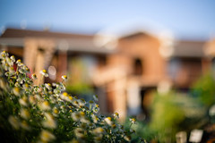 perspective (KieraJo) Tags: 50mm 14 canonef50mmf14usm lens canon 5d mark 3 iii 5d3 fullframe dslr southern utah duck creek branches leaves free lensing freelens sky blur bokeh creamy beautiful plants flowers floral daisies white yellow petals hotel building abstract dreamy